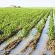 تصفیه فاضلاب کشاورزی